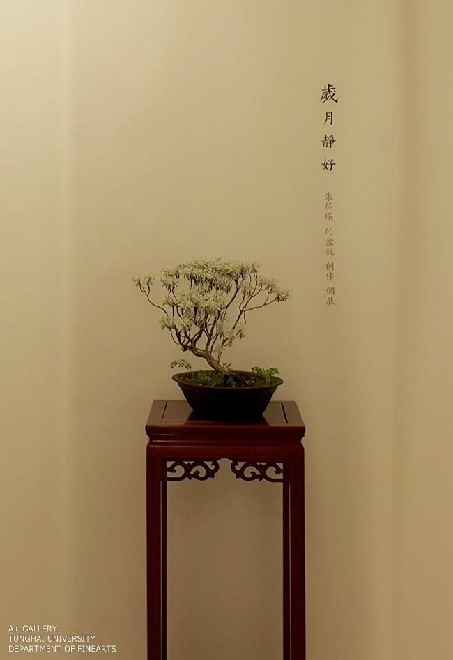 [A+藝術空間] 歲月靜好–盆栽|朱屏瑛